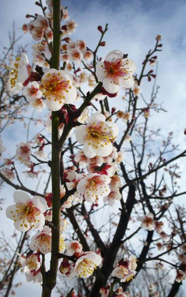 Flowers of Every Season