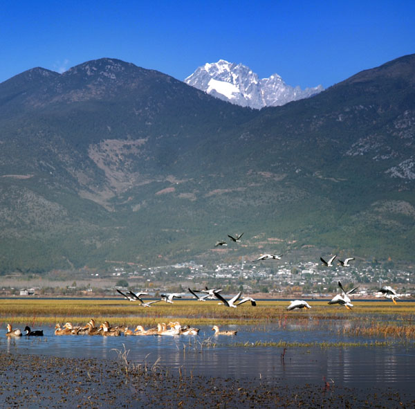 1-Day  Lashi Lake Ancient Tea Horse Trail, Tibetan Temple & Farmhouse Visit