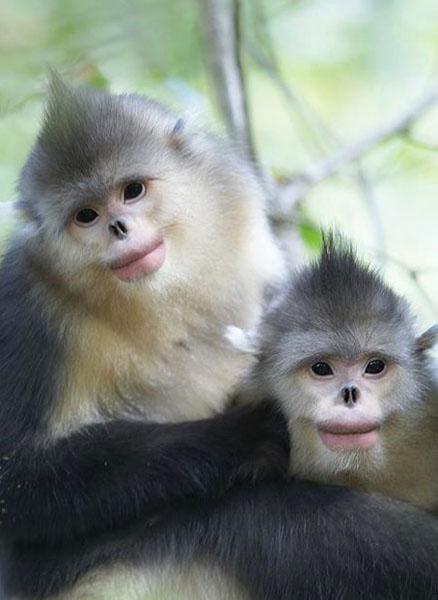 2日: 滇金丝猴国家森林公园&黎明丹霞地貌