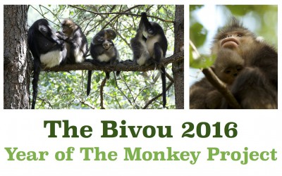 Year of the Monkey Project